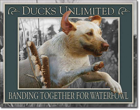 Banding Together For Waterfowl