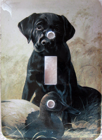 Black Labrador Cover