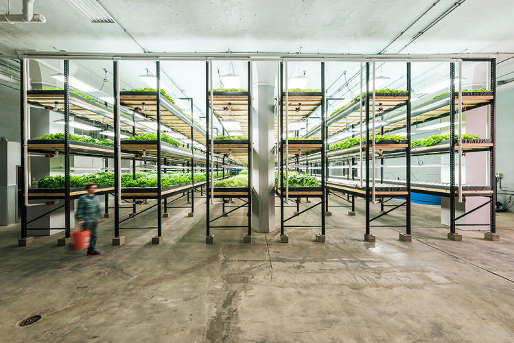 futuristic fish farm this old factorynow full of fish and kaleis revitalizing a