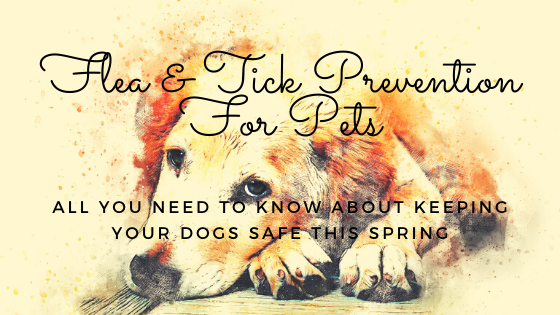 Flea and Tick Prevention For Pets