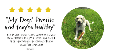 Monica F. is guilt free giving her pup our healthy single ingredient bully sticks!