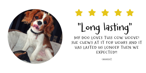Jessica Z. loves Pawstruck's long lasting cow hooves, they're the perfect chew for her dog