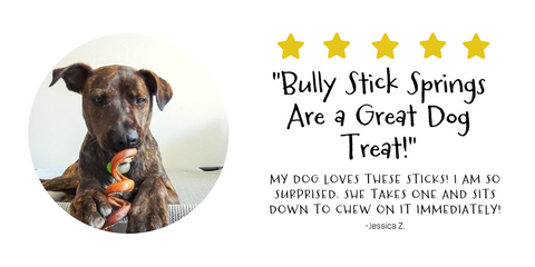 Jessica Z. loves Pawstruck's bully stick springs for her pup!