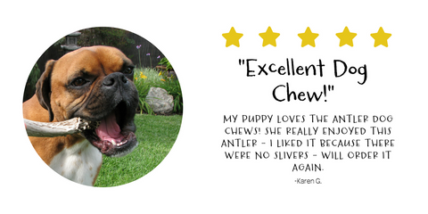 Karen G. loves her Pawstruck's antlers and they are the perfect chew for her pup!