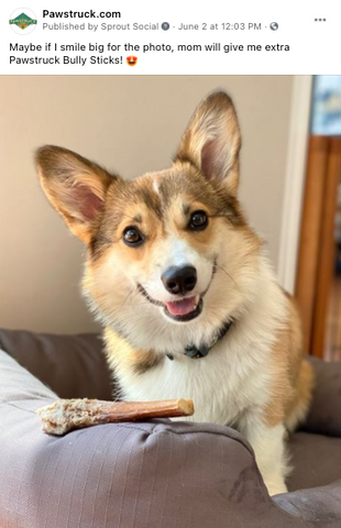 photo of dog looking at the camera with a bully stick next to him