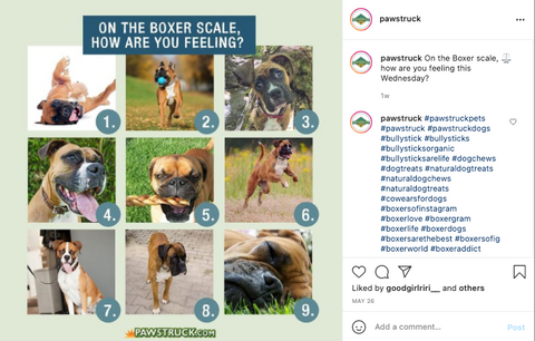 Image of 9 boxer dogs with the text: on a boxer scale of 1-9, how's your Friday going?
