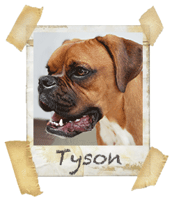 Chief Canine Officer, Tyson