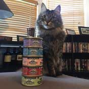 Taco Cat posing with his Redbarn Canned Cat Food