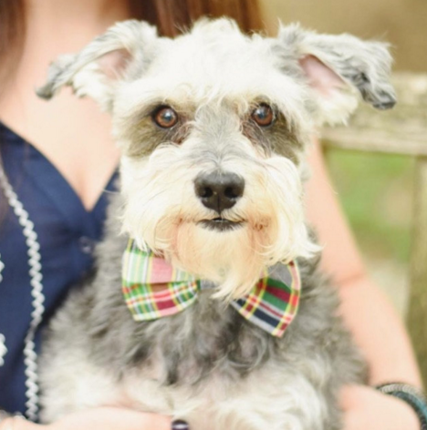 Classic Madras Bow Tie Dog Collar