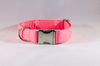 Pink Anchor Dog Collar