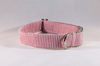 Preppy Red Seersucker Dog Collar