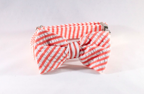 Preppy Coral Seersucker Bow Tie Dog Collar