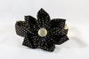 Black and Gold Polka Dot Girl Dog Flower Bow Tie Collar