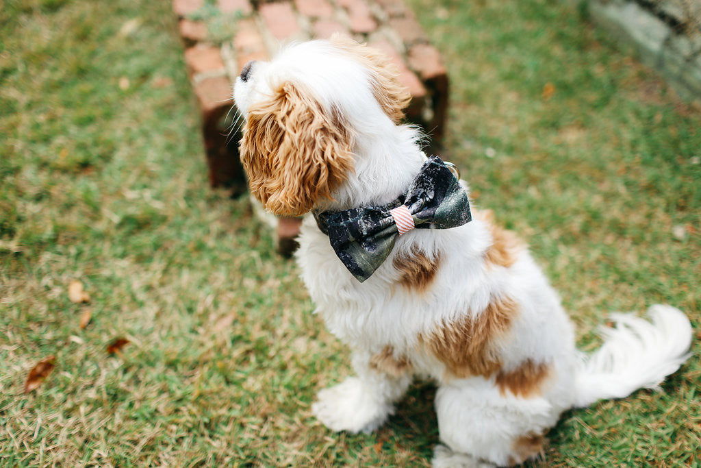 Preppy Sporting Pup Camo and Orange Seersucker Bow Tie Dog Collar