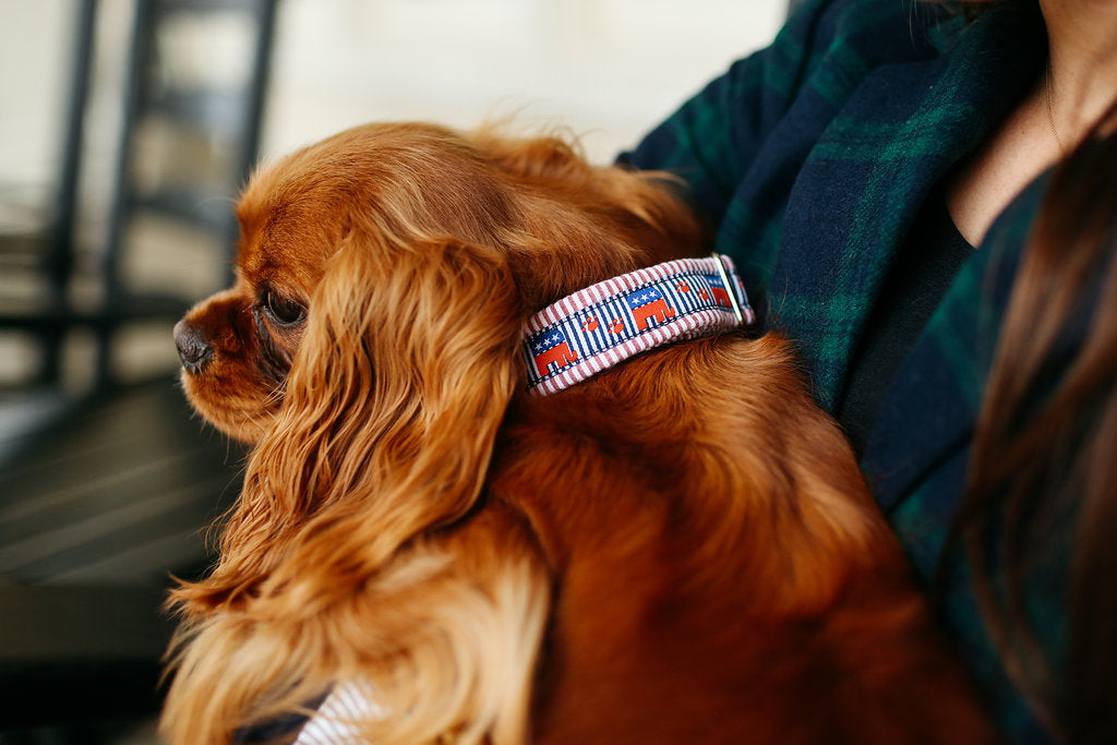 Repuplican Seersucker Dog Collar