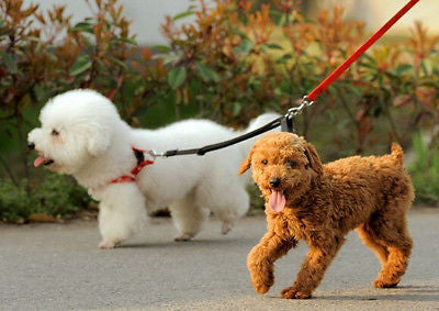Strong Double Leash