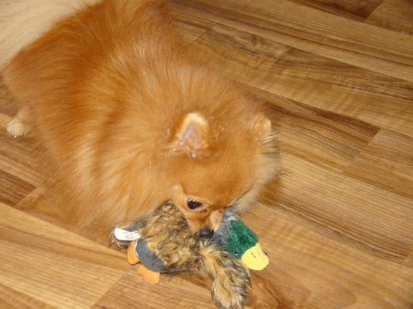 Classic Squeaking Duck Toy