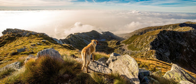 Paw-some Adventure Dogs of Instagram