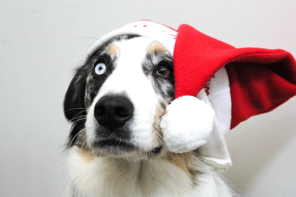 5 London Dog Events This Holiday Season