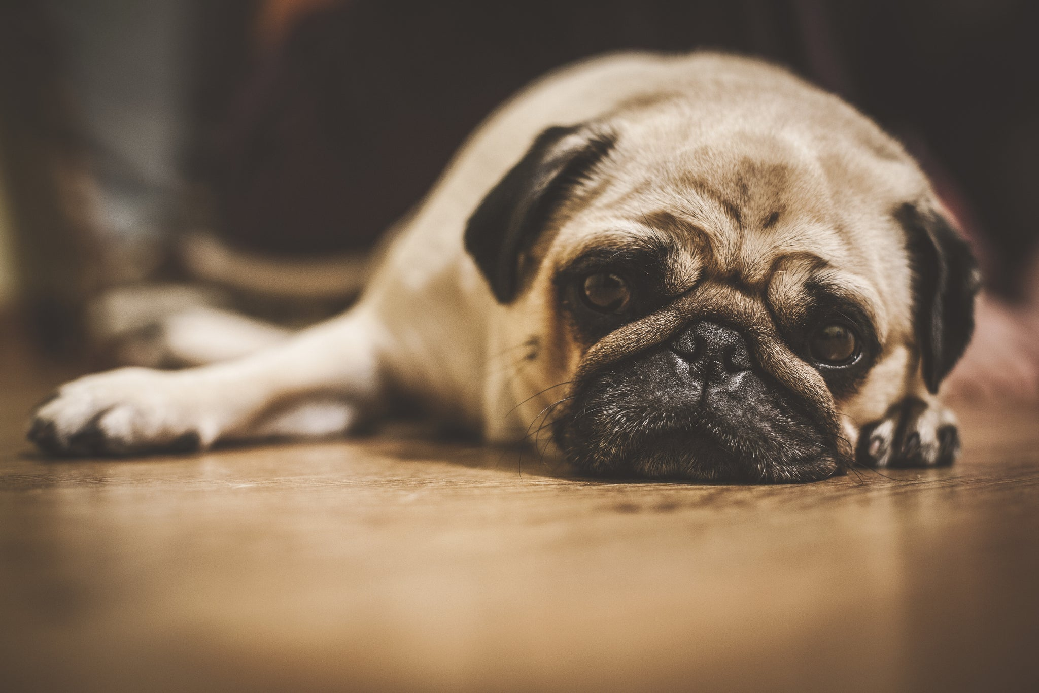 6 things you're doing to (unintentionally) break your dog's heart