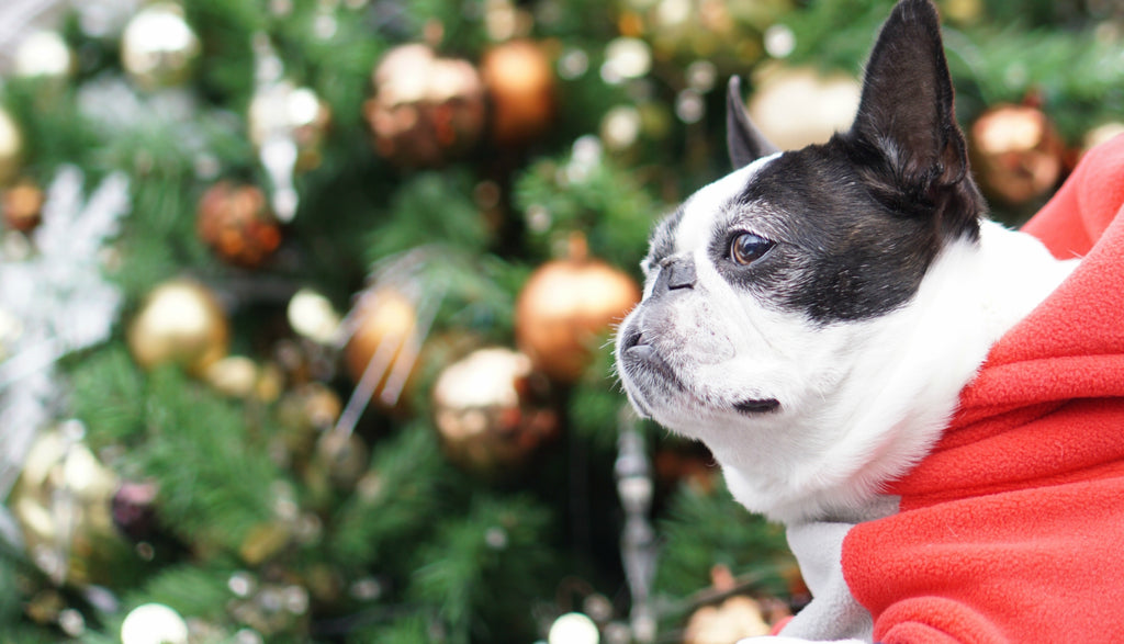 How to Make the Most of your Dog's Christmas