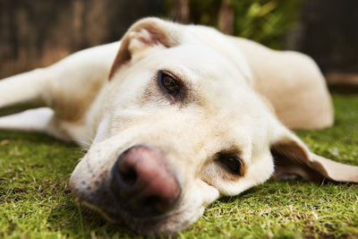 What to do if your dog is bored?