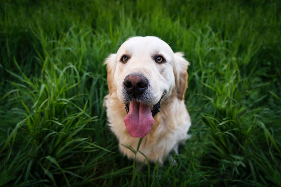 5 steps to better teeth for your pooch