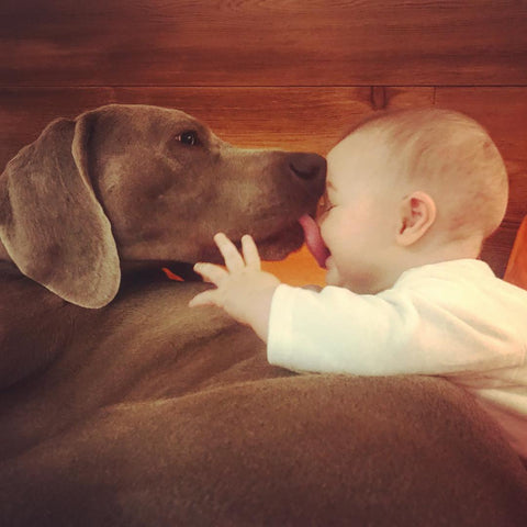 Dog kisses