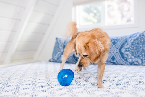 Lil' Snoop is a translucent and pliable ball with a deep crevice that conceals treats. Dogs will need to pounce, nudge, nose, and nibble the ball to release the treats hidden inside. This treat dispensing puzzle toy keeps dogs engaged, drives brain stimulation, and promotes self-play.