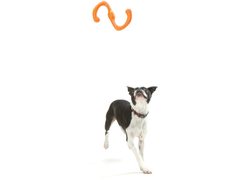 Fetch, tug, run, and repeat. This toy was designed for active play. Bumi is an S-shaped toy that flexes to twice its length during a game of tug-o-war. The smart design and light weight allow it to fly far, making it great for fetch or flinging.
