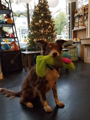 Four gifts in one neat little package. Your dog will receive the Duraplush Christmas Stocking and 3 medium size Duraplush Bones. This durable and soft dog toy is eco-friendly and made in the USA. It features a Duraplush 2-ply bonded outer material, Stitchguard internal seams, and eco-fill recycled filling.