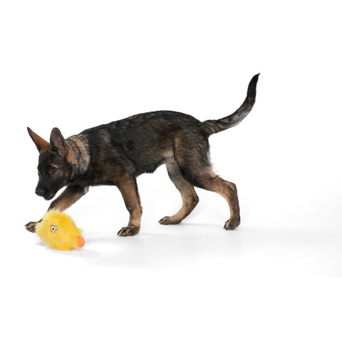 Rowdies are the best of plush and chew toys all rolled into one fun toy your dog will love. West Paw combined the sturdiest technologies to make an extremely durable plush dog toy. Rowdies contain a squeaker to prompt play, and chew bones for dogs who like to gnaw.