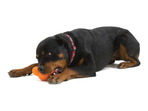 Tux has stood the test of time, and up to some fearsome fangs as West Paw's toughest toy. Dogs love to chew on it, especially when stuffed full of their favorite snacks. Tux is fun to toss, and dogs love its unpredictable bounce during a game of fetch.