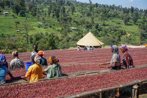 Organic Ethiopia Natural 'Kayon Mountain'