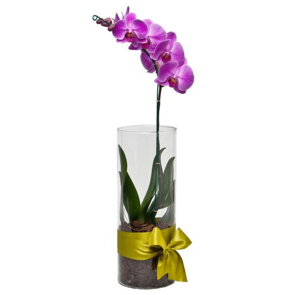 Pink Orchid - The Shop Flowers