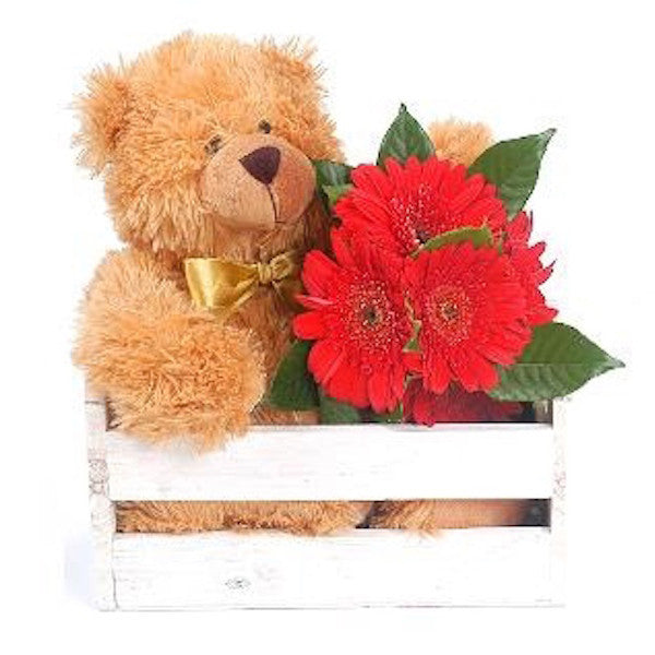 Teddy - The Shop Flowers