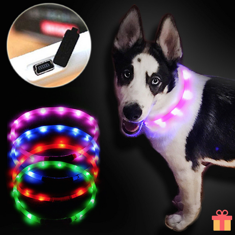 USB Rechargable LED Dog Outdoor Collar