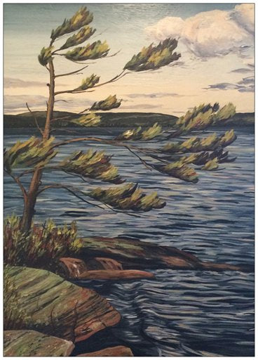 Georgian Bay Windswept Pine Painting Postcard