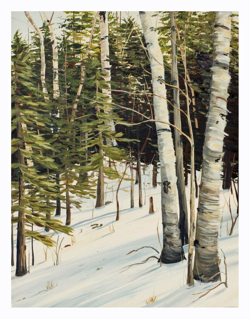 Winter Birches, Signed Limited Edition Print
