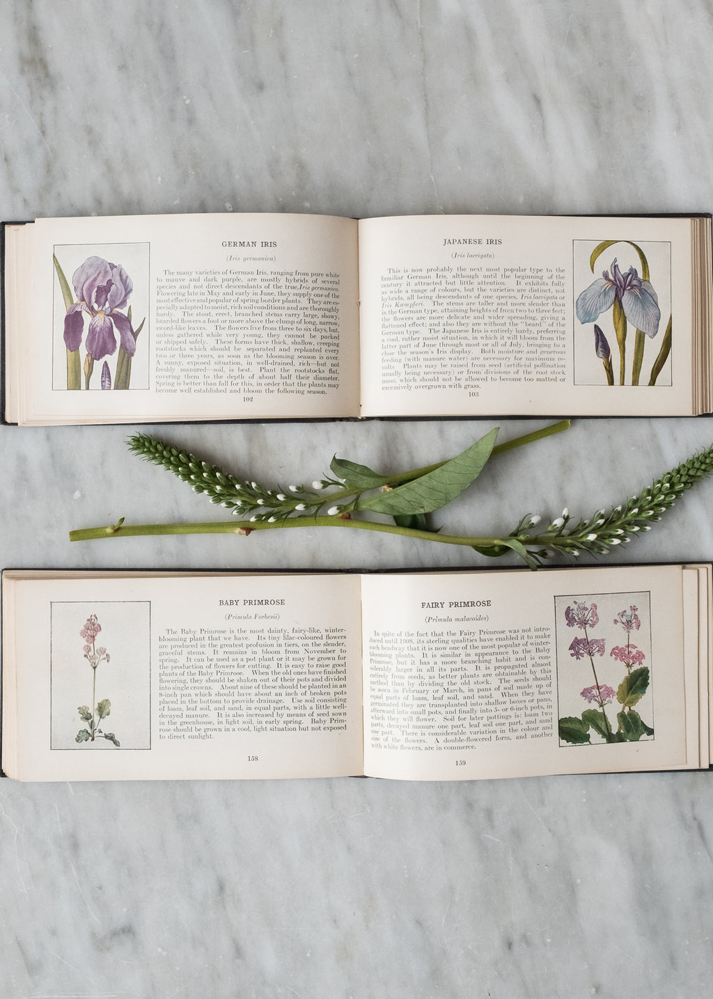Antique Flower Book Set