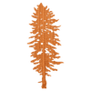 Doug Fir Wood Sticker