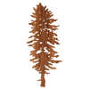 Doug Fir Wood Sticker - Rustek