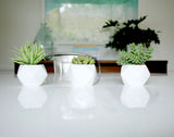 Faux Potted Sedum in White Geometric Pot