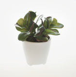 Artificial Jade Potted Plant
