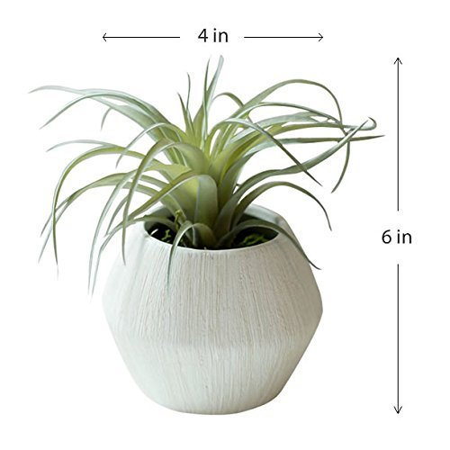 Air Plant Faux Tillandsia potted in White Textured Ceramic Pot