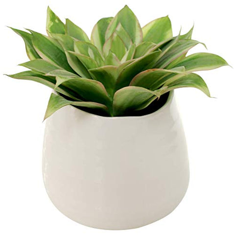 Potted Faux Aloe in Geometric White Vase