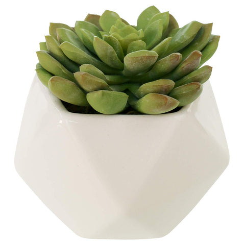 Green Echeveria Potted in Black Matte Square Vase
