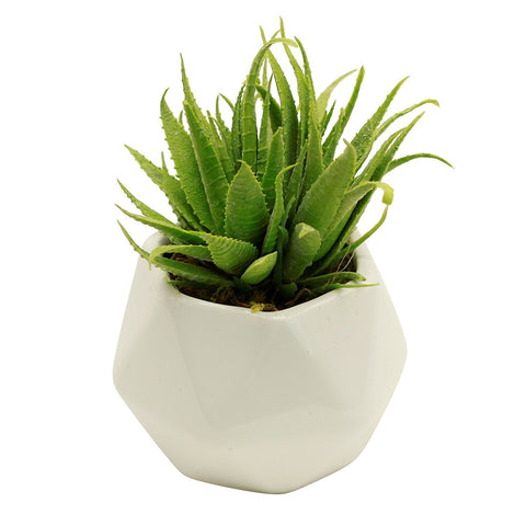 White Ceramic Potted Large Real Touch Spikey Two Tone Echeverria Artifical Plant