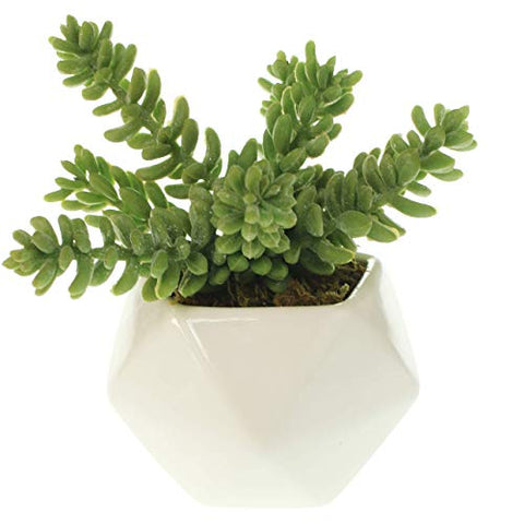 Gold Geometric Potted Succulent Arrangement
