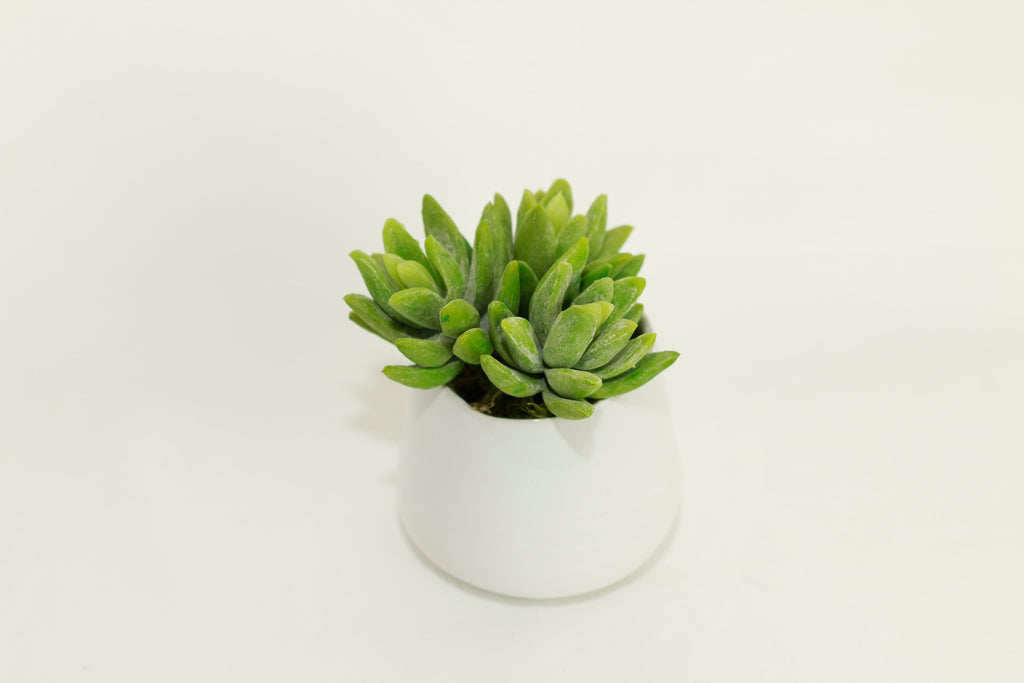 Small Faux Succulent Plant in White Ceramic Vase - Artificial Succulent Trio Decor Potted
